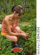Девушка собирает клубнику на даче. Стоковое фото, фотограф Давыдов Юрий / Фотобанк Лори