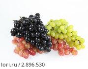 Купить «Кисти винограда на белом фоне», фото № 2896530, снято 6 октября 2011 г. (c) Наталья Волкова / Фотобанк Лори