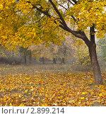 Купить «Туманное осеннее утро в лесу», фото № 2899214, снято 9 октября 2011 г. (c) Nickolay Khoroshkov / Фотобанк Лори
