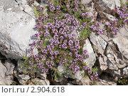 Купить «Растительный мир Крыма», фото № 2904618, снято 12 июля 2011 г. (c) Михаил Рыбачек / Фотобанк Лори