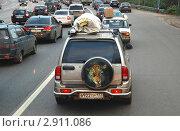 Купить «Плотный поток машин на дороге», эксклюзивное фото № 2911086, снято 22 октября 2011 г. (c) lana1501 / Фотобанк Лори