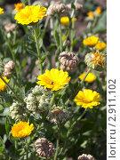 Желтые полевые цветы. Стоковое фото, фотограф Олыкайнен Наталья / Фотобанк Лори