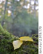 Пара. Стоковое фото, фотограф Екатерина Болсунова / Фотобанк Лори