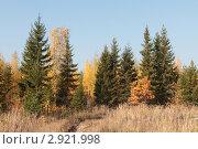 Купить «Подмосковный пейзаж», эксклюзивное фото № 2921998, снято 8 октября 2011 г. (c) Дмитрий Неумоин / Фотобанк Лори