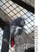 Попугай жако. Стоковое фото, фотограф Ульяна Смирнова / Фотобанк Лори