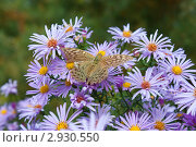Осенние цветы. Стоковое фото, фотограф Маргарита Волгина / Фотобанк Лори
