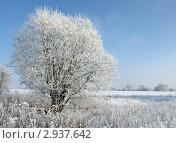 Зима...иней...мороз. Стоковое фото, фотограф Андрей Грибачев / Фотобанк Лори