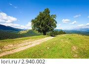 Купить «Летний пейзаж», фото № 2940002, снято 21 августа 2010 г. (c) Юрий Брыкайло / Фотобанк Лори