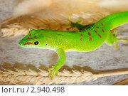 Купить «Зеленая ящерица», фото № 2940498, снято 9 августа 2011 г. (c) Александр Лебедев / Фотобанк Лори