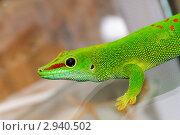 Купить «Зеленая ящерица», фото № 2940502, снято 9 августа 2011 г. (c) Александр Лебедев / Фотобанк Лори