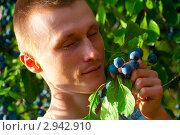 Мужчина наслаждается запахом ягод. Стоковое фото, фотограф Елена Алексеева / Фотобанк Лори