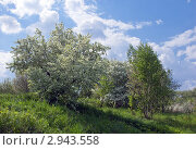 Весенний природный пейзаж с цветущими яблонями на склоне с облаками на синем небе. Стоковое фото, фотограф Валентин Никитин / Фотобанк Лори