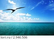 Купить «Альбатрос летит над Карибским морем», фото № 2946506, снято 10 ноября 2009 г. (c) Iakov Kalinin / Фотобанк Лори