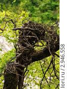 Дерево. Стоковое фото, фотограф Анохин Дмитрий / Фотобанк Лори