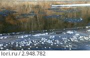 Купить «Отражение берега в зеркале реки. Тонкий лед на берегу и тихо плывущая шуга», видеоролик № 2948782, снято 14 ноября 2011 г. (c) Виктория Катьянова / Фотобанк Лори