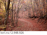 Купить «Тропа в лесу. ОСенняя листва на деревьях», фото № 2948926, снято 28 октября 2011 г. (c) Nickolay Khoroshkov / Фотобанк Лори