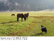Ранее утро в горах Алтая. Стоковое фото, фотограф Виктор Ковалев / Фотобанк Лори