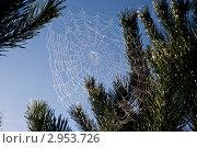 Купить «Паутина», фото № 2953726, снято 9 сентября 2011 г. (c) Виктор Ковалев / Фотобанк Лори