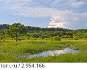 Купить «Маленькое озеро посреди луга», фото № 2954166, снято 11 июля 2010 г. (c) Олег Рубик / Фотобанк Лори