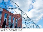 Колючая проволока на тюремной ограде. Стоковое фото, фотограф Володина Ольга / Фотобанк Лори