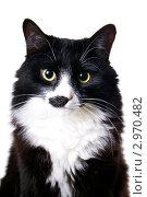 Купить «Портрет кота», эксклюзивное фото № 2970482, снято 14 ноября 2011 г. (c) Куликова Вероника / Фотобанк Лори