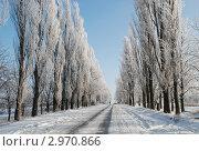 Зимняя дорога. Стоковое фото, фотограф Ковальский Сергей / Фотобанк Лори