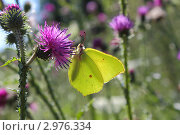 Бабочка. Стоковое фото, фотограф Виктор Зандер / Фотобанк Лори