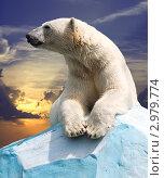 Купить «Белый полярный медведь на фоне заката», фото № 2979774, снято 14 июля 2011 г. (c) Яков Филимонов / Фотобанк Лори
