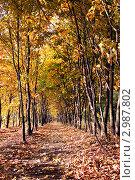 Купить «Осенняя аллея, освещенная ярким солнцем», фото № 2987802, снято 8 октября 2011 г. (c) Nickolay Khoroshkov / Фотобанк Лори