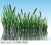 Купить «Рогоз в воде», иллюстрация № 3006026 (c) Павел Коновалов / Фотобанк Лори