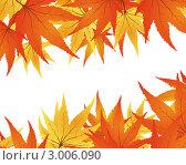 Иллюстрация с осенними кленовыми листьями на белом фоне. Стоковая иллюстрация, иллюстратор Павел Коновалов / Фотобанк Лори