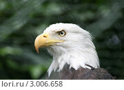 Купить «Орел», фото № 3006658, снято 14 августа 2010 г. (c) Юрий Борисенко / Фотобанк Лори