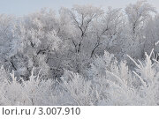 Зима. Стоковое фото, фотограф Алексей Сахаров / Фотобанк Лори
