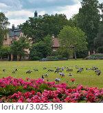 Утки на зеленых полях в Стокгольме (2011 год). Стоковое фото, фотограф Наталья Степанова / Фотобанк Лори