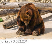 Купить «Медведь в зоопарке», фото № 3032234, снято 4 июля 2009 г. (c) Роман Шаповалов / Фотобанк Лори