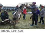 Купить «Коза заигрывает с  ребенком», фото № 3041570, снято 11 сентября 2011 г. (c) Алена Потапова / Фотобанк Лори