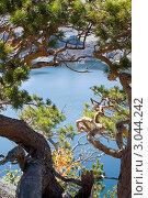 Сосна над озером. Стоковое фото, фотограф Александр Морозов / Фотобанк Лори