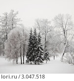 Зимний пейзаж с заснеженными деревьями. Стоковое фото, фотограф Иван Михайлов / Фотобанк Лори