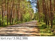 Купить «Дорога в лесу», эксклюзивное фото № 3062986, снято 11 июля 2011 г. (c) Елена Коромыслова / Фотобанк Лори