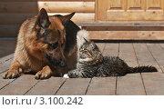 Купить «Друзья», фото № 3100242, снято 23 мая 2010 г. (c) Елена Нефедова / Фотобанк Лори