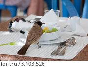 Купить «Птичий завтрак», фото № 3103526, снято 17 мая 2011 г. (c) Михаил Котов / Фотобанк Лори