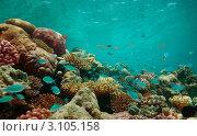 Купить «Коралловый риф и его обитатели», фото № 3105158, снято 10 июля 2011 г. (c) Сергей Новиков / Фотобанк Лори