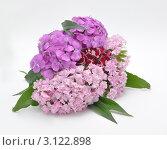 Купить «Букет из цветов», фото № 3122898, снято 14 июня 2010 г. (c) Лищук Руслан Викторович / Фотобанк Лори