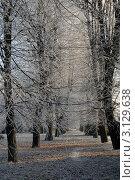 Калининград. Зимний день  в парке (2011 год). Стоковое фото, фотограф Svet / Фотобанк Лори