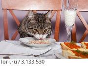 Банкет для животных. Стоковое фото, фотограф Okssi / Фотобанк Лори