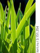 Зеленая трава освещенная солнцем. Стоковое фото, фотограф Евдокимова Ольга / Фотобанк Лори