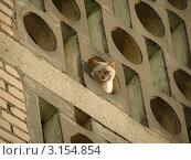 Мордочка белого кота, выглядывающая из элемента архитектурного сооружения. Стоковое фото, фотограф Воробьева Елена / Фотобанк Лори