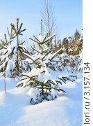 Купить «Молодая ёлочка занесённая снегом», эксклюзивное фото № 3157134, снято 18 января 2012 г. (c) Елена Коромыслова / Фотобанк Лори