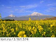 Купить «Арарат в Армении», фото № 3161574, снято 26 мая 2011 г. (c) Евгений Суворов / Фотобанк Лори
