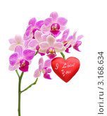 Купить «Валентинка на ветке орхидеи на белом фоне», фото № 3168634, снято 22 января 2012 г. (c) Ласточкин Евгений / Фотобанк Лори